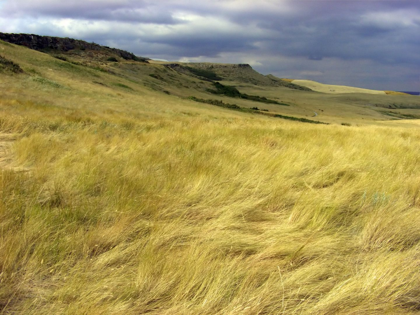 tropical grasslands People and the temperate grassland: one of the main environmental concerns regarding temperate grasslands is the conversion of grassland.