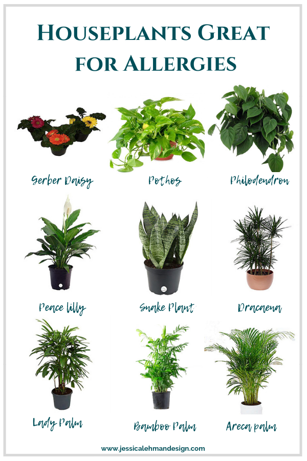 Best Indoor Houseplants For Allergies Houseplants Indoor Plants Air Purifying House Plants