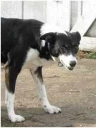 Adopt Lady Nicole On Labrador Retriever Mix Dogs Labrador