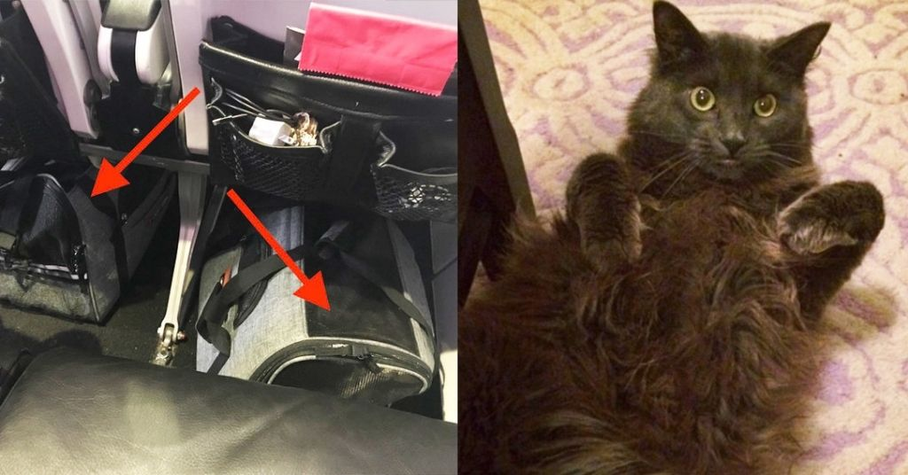 What It S Really Like To Travel With Your Cats Across The Country