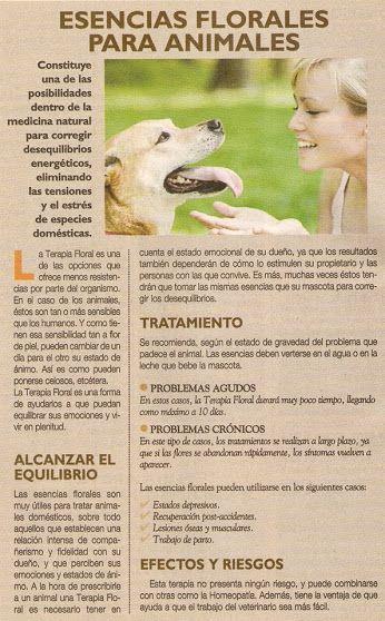 dieta alcalina para perros