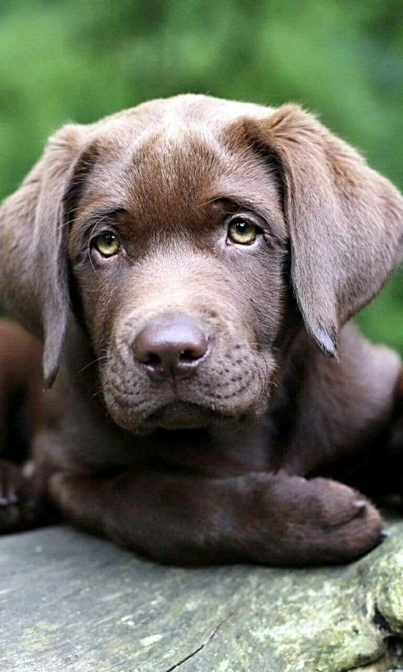 Pin Von Payton Kouba Auf Puppies Hunderassen Hunde Fotos Hunde