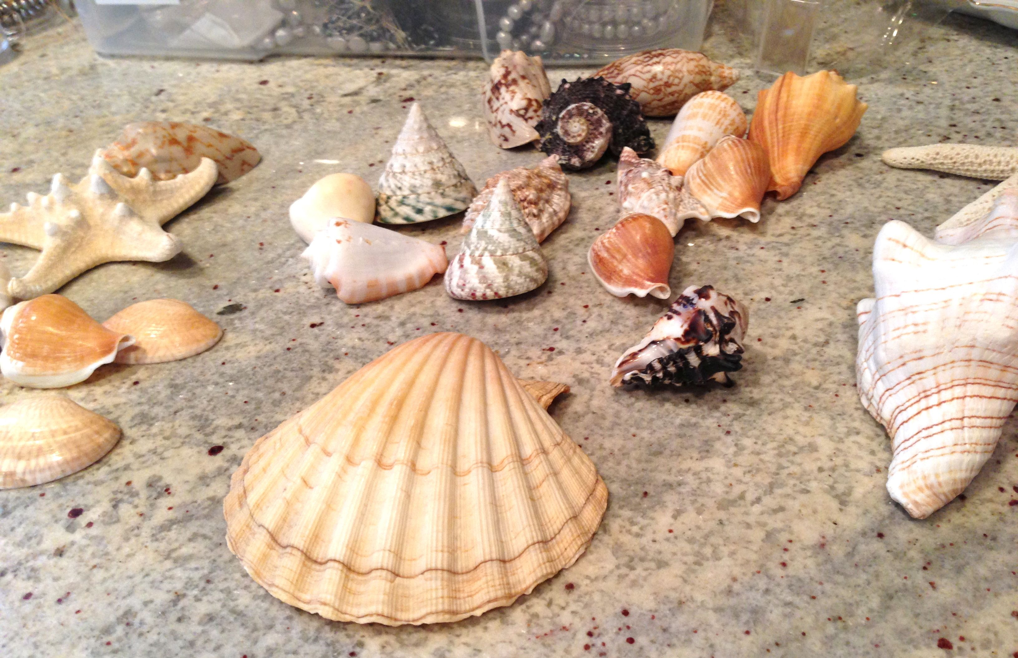 shells pictures - Google Search