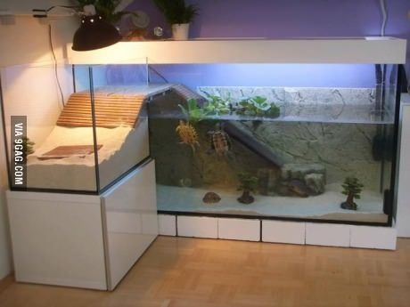 Cool turtle habitat