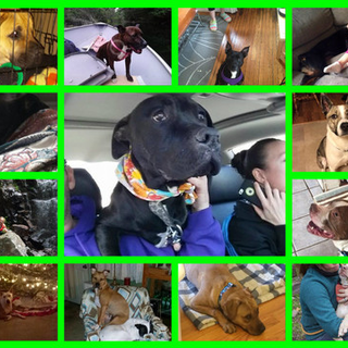 A Cry For Help Destiny S Road Animals Rescue Is An All Volunteer Group Focused On Rescuing
