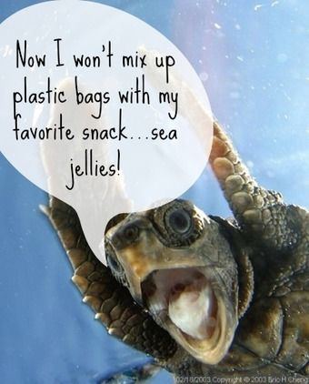 3 Marine Animals Who Are Thrilled About California's Plastic Bag Ban