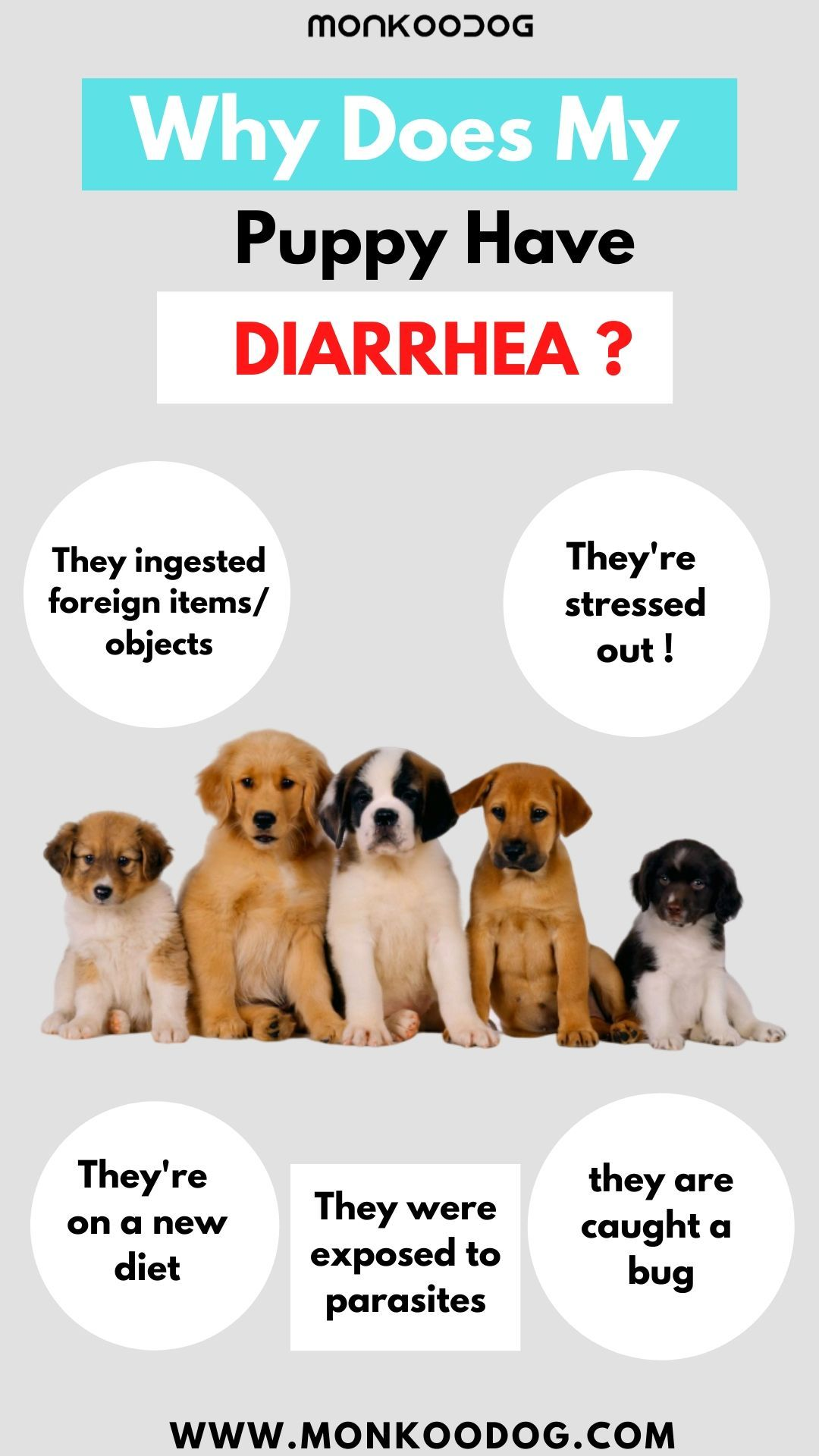 Why Does My Puppy Have Diarrhea In 2020 Dog Weight Dog Weight Chart Dogs