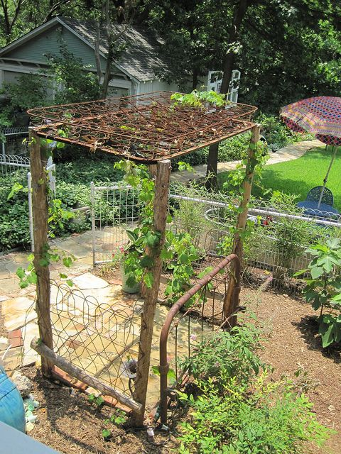 Grape Arbor With Cedar Posts And Old Bed Springs As A Top