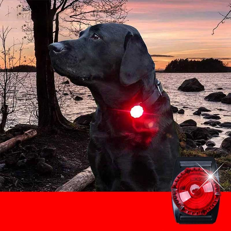 Pet Night Safety Led Flashlight Cat Dog Glowing Collar In 2020 Dogs Night Safety Pets