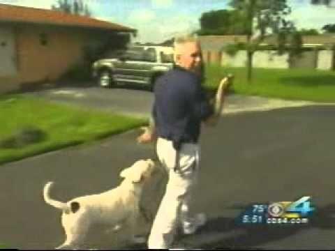 Miami Dog Whisperer Dog Training Tip How To Walk Your Dog