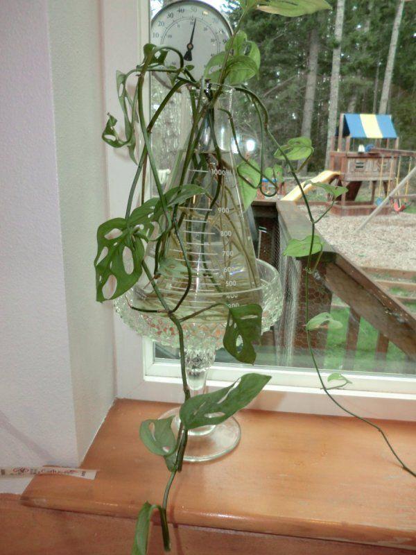 Growing Plants In Water Indoor Water Garden Water Plants Plants