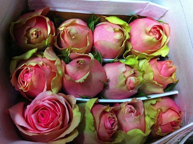 #Caress Ecuador Roses, available at www.barendsen.nl