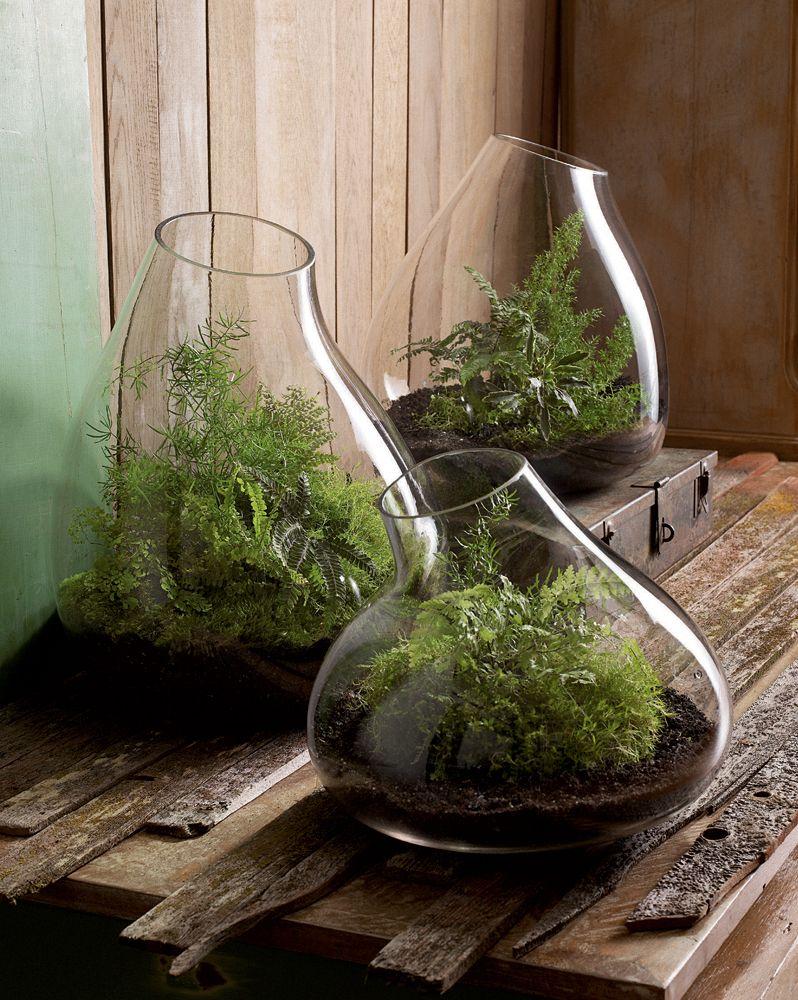 Modern Glass Terrarium Indoor Garden Planter - Modern Glass Terrarium Indoor Garden Planter Terraria, Garden
