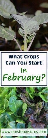 February Seed Starting Schedule learn what crops your can start as seedlings in February Seed Starting Schedule learn what crops your can start as seedlings in