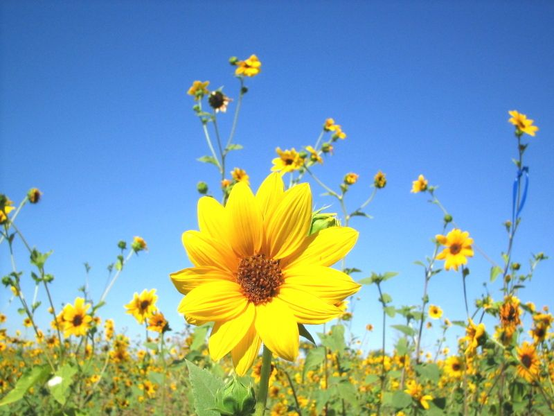 Pictures of yellow items is coming and this makes me happy explore yellow daisies floral flowers and more mightylinksfo Images