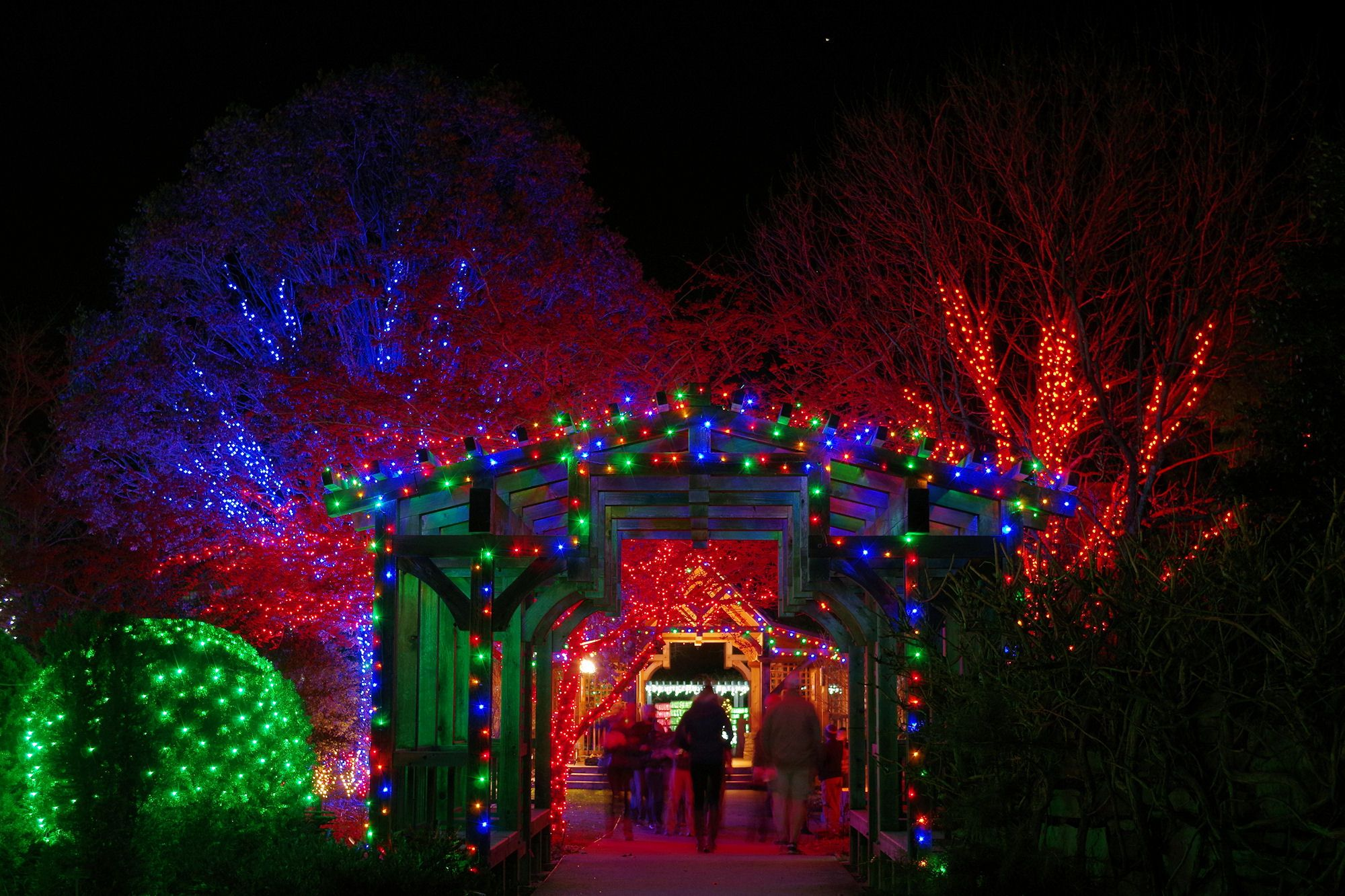 Winter Lights at the NC Arboretum in Asheville | Christmas ...