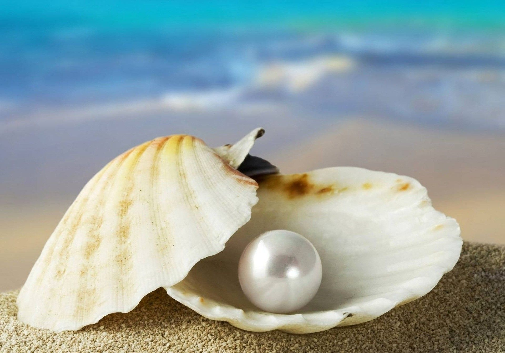 A Choice Pearl Pearls Oyster Pearl Oysters