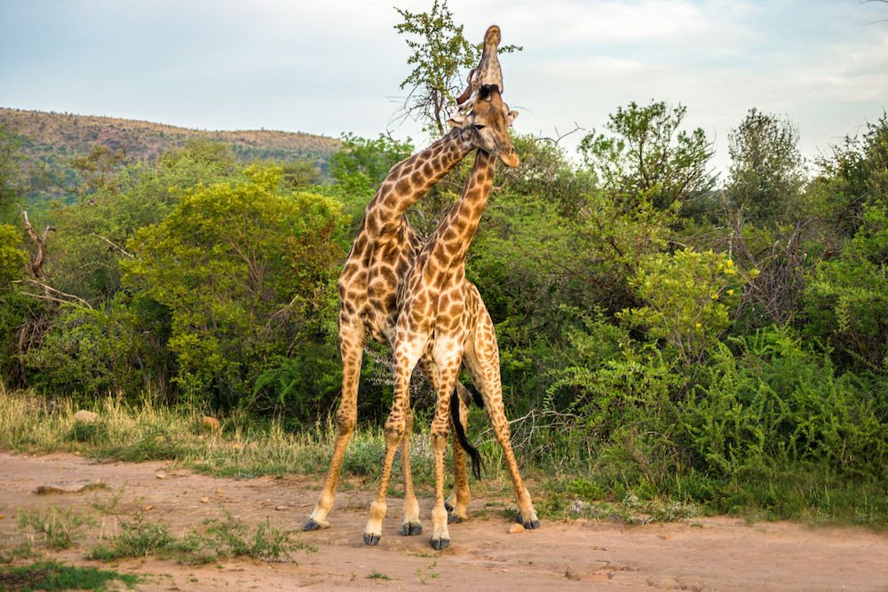 Interesting Facts And Activities South Africa Nature Nature Reserve Fun Facts