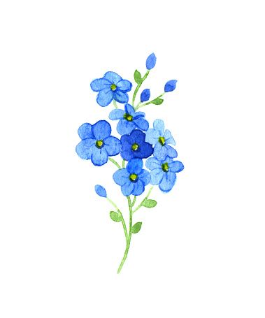 e4d5aafb91c54 Forget Me Not Clip Art, Vector Images & Illustrations - iStock More