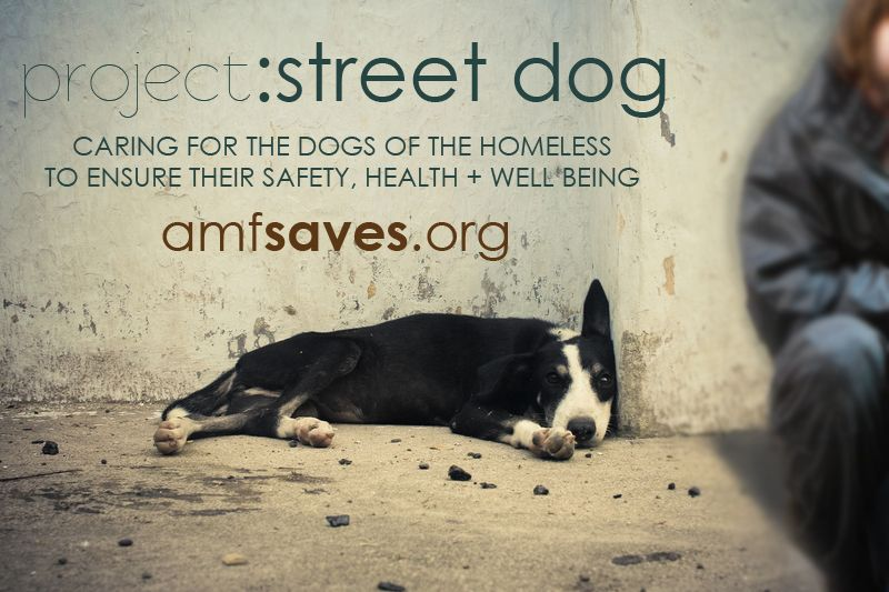 Project Street Dog Helping The Dogs Of The Homeless Live Better