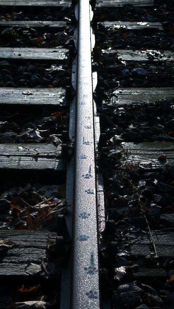 Paw Prints Animal Tracks The Meta Picture Photography Illustration