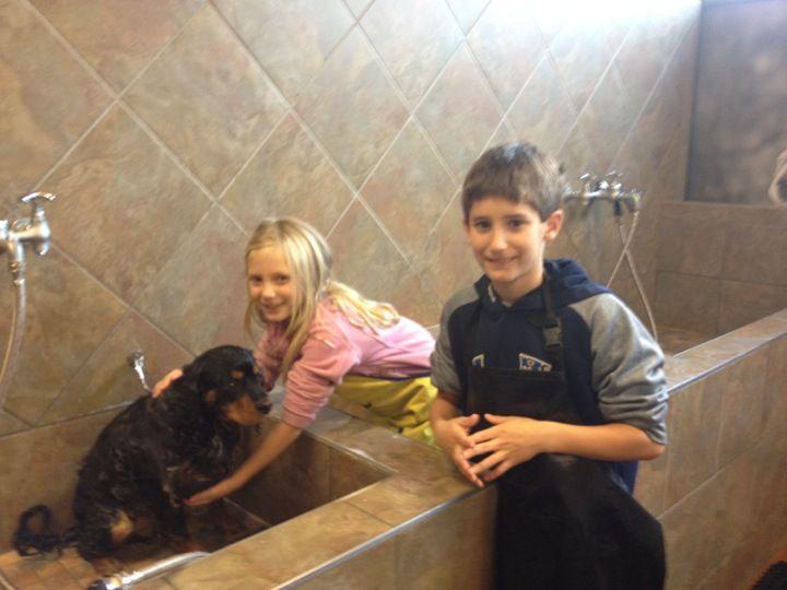 Pet Valu Ardmore Pa Dog Grooming Tips Dog Washing Station