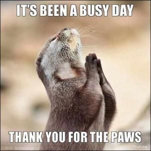 """thank you for the """"paws"""""""