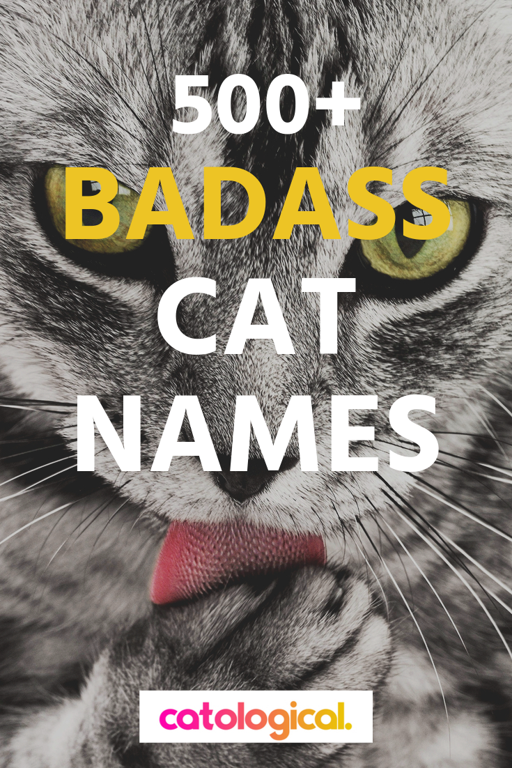 500 Badass And Tough Cat Names For Male And Female Kitties In 2020 Girl Cat Names Cat Names Cute Cat Names
