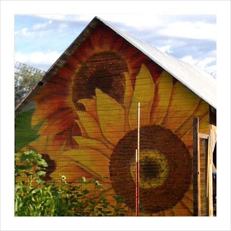 Sunflowers on side of barn.