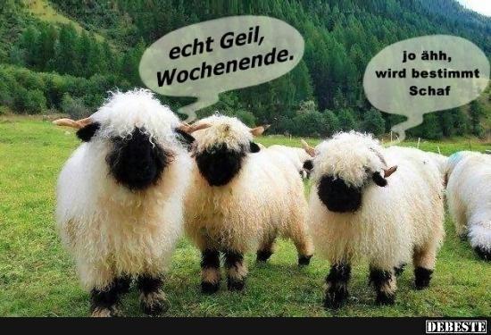 Echt Geil, Wochenende.. | Lustige Bilder, Sprüche, Witze ...