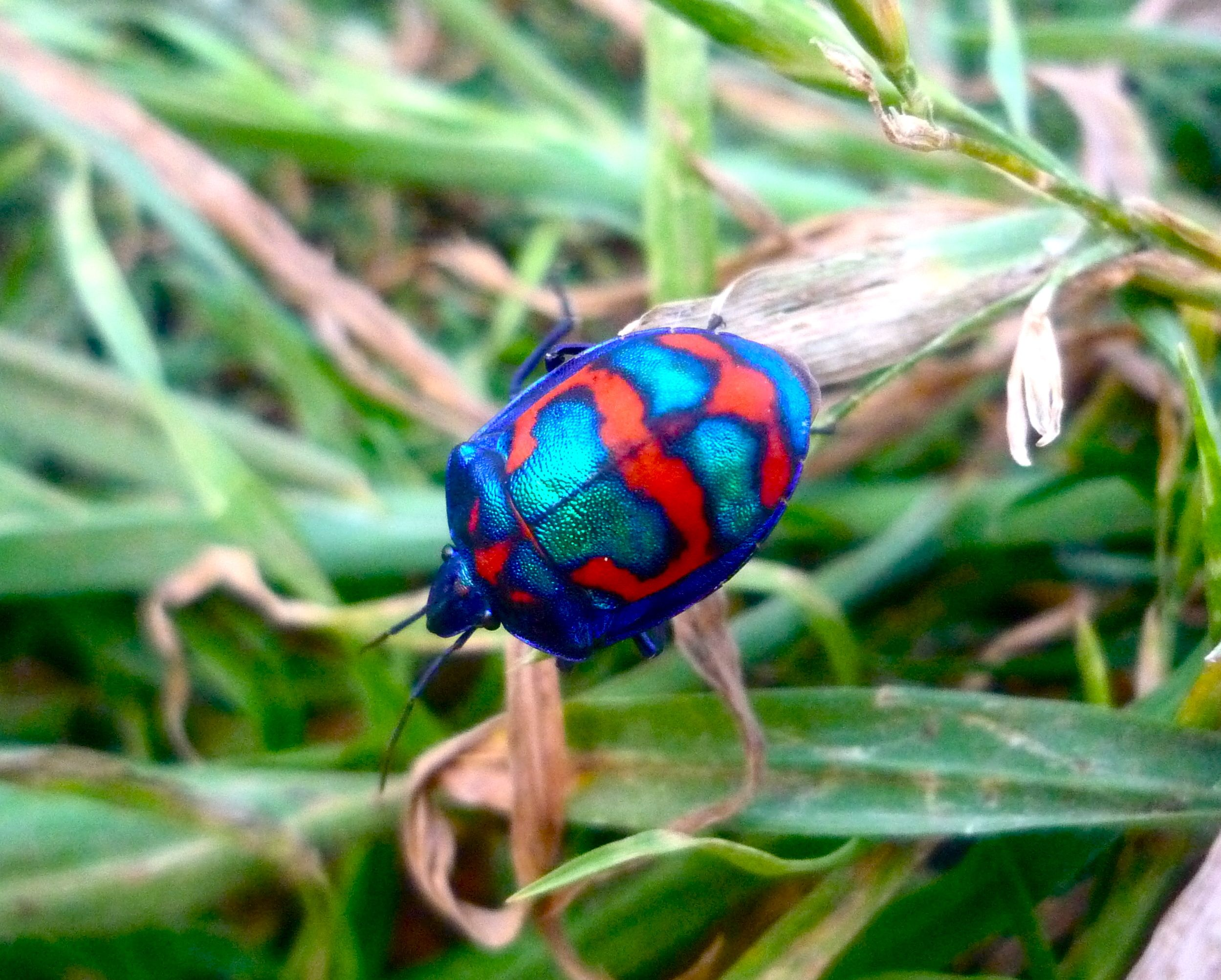 Colourful bug our amazing planet pinterest colourful bug buycottarizona