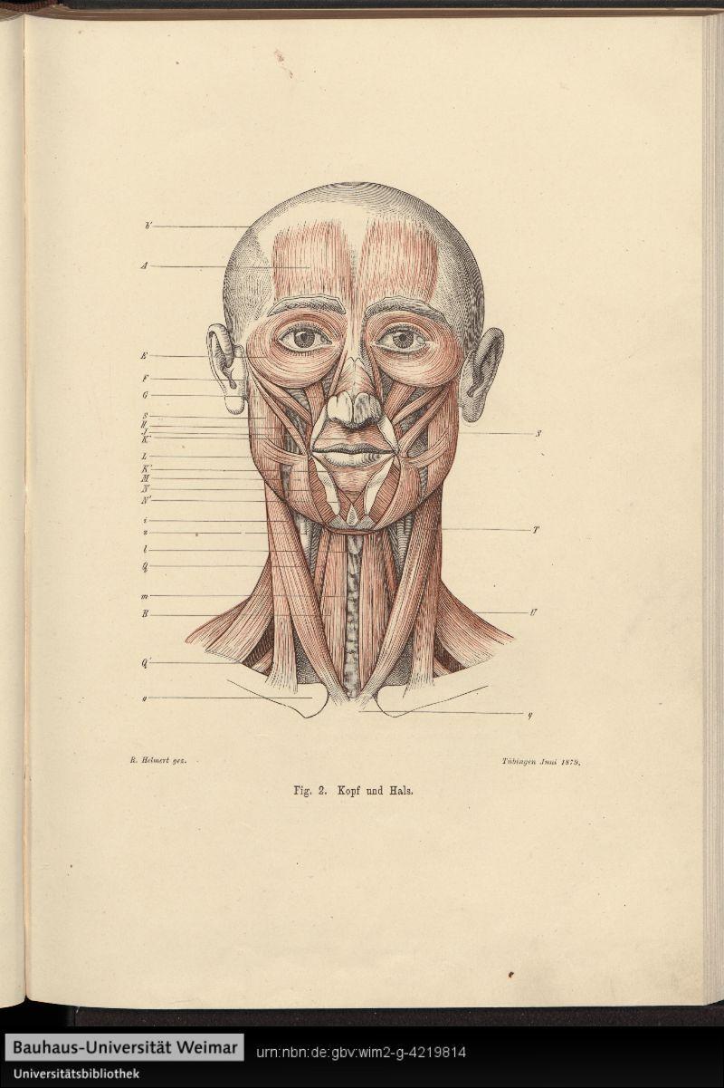 Anatomy for Artists, 1880. Anatomie für Künstler - Digitale ...