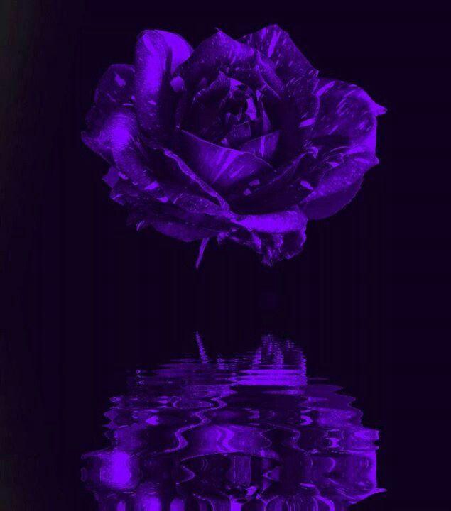 Purple for Chiari