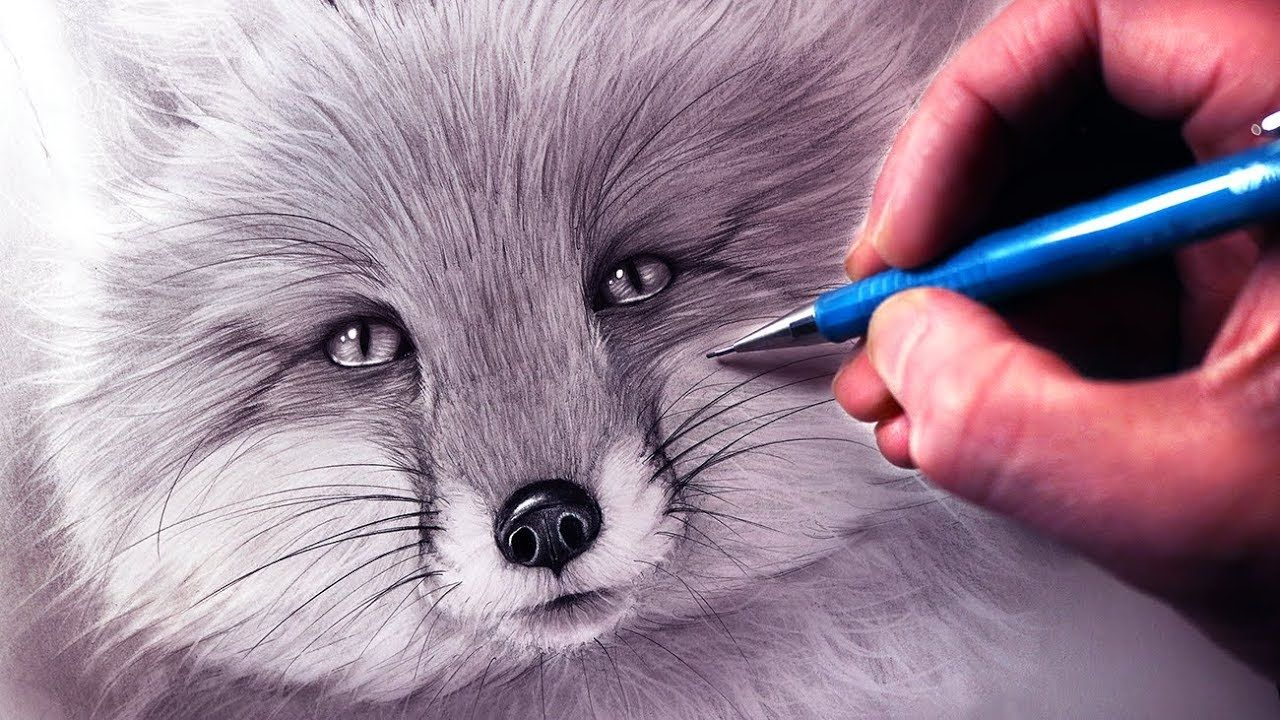 How To Draw A Fox Using Pencil And Graphite Step By Step Tutorial Art Draw Drawings Pencil Drawing Tutorials Pencil Drawings Of Animals Color Pencil Drawing
