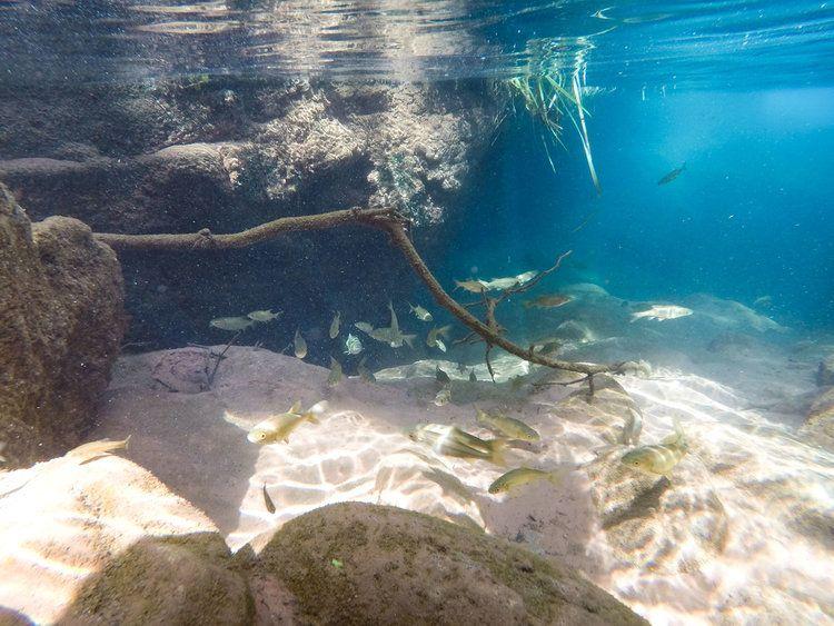 Fossil Creek hidden cave, in Arizona, blue clear water