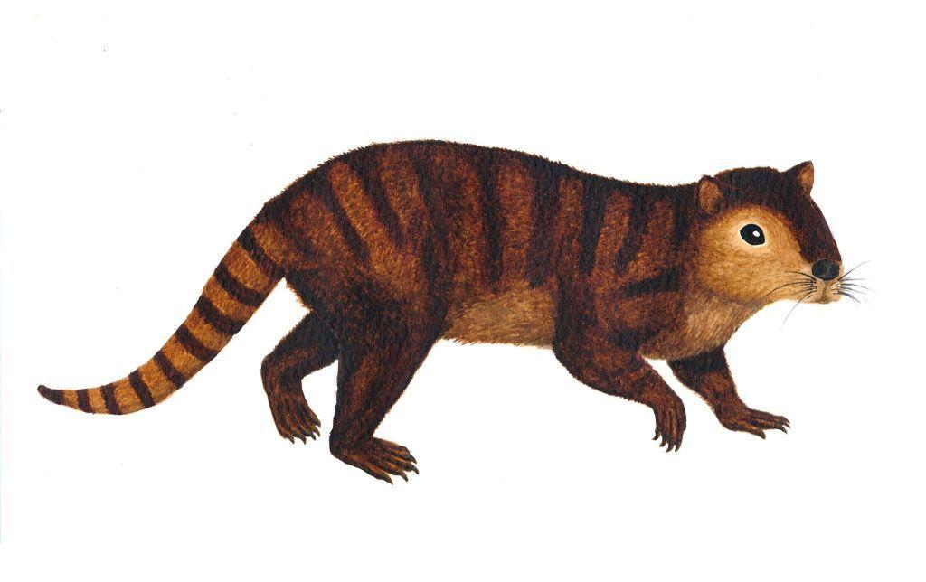 Paleo Profile Kimbetopsalis simmonsae Prehistoric