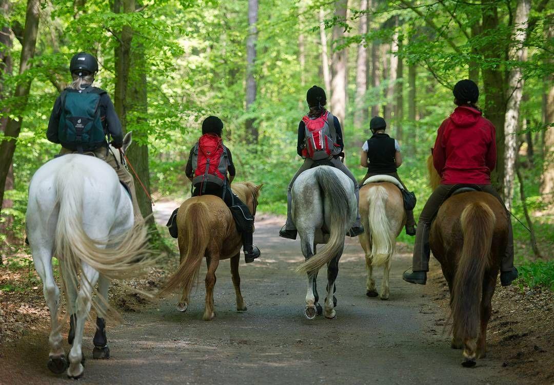 Die Besten Reiterhofe Deutschlands Reiterurlaub Reiten Hof