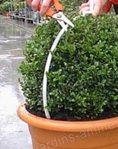 Gabarit taille de buis jardin pinterest buis gabarit et jardinage - Taille des buis ...