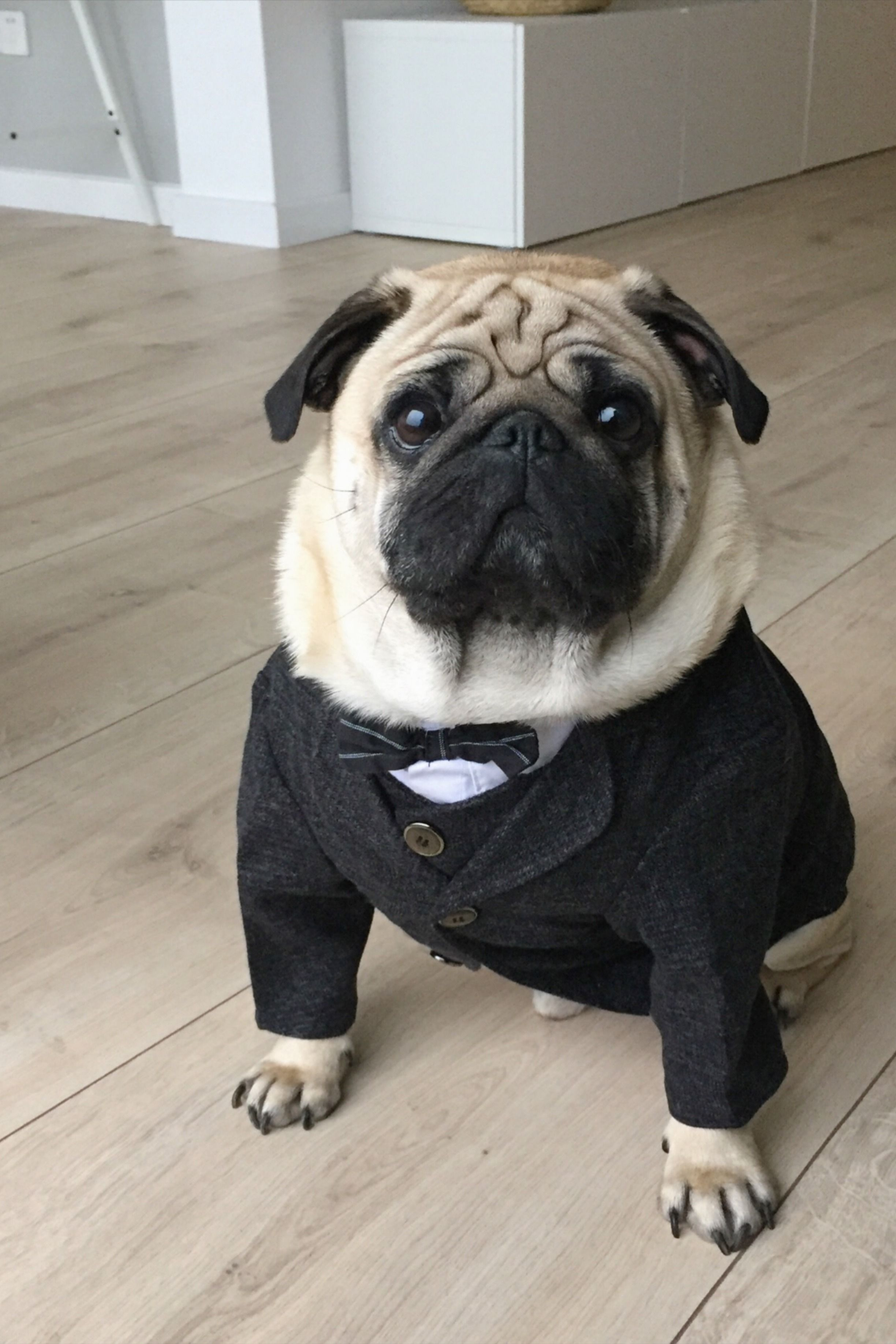 Handsome Dog Wedding Costume Formal Suit Evening Outfit For