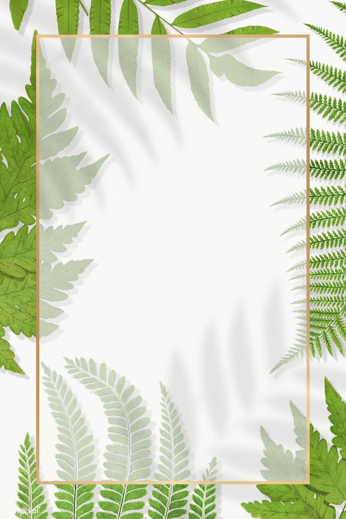 Frame Of Fern Leaves Transparent Png Premium Image By Rawpixel Com Manotang Flower Illustration Cute Wallpaper Backgrounds Leaf Illustration