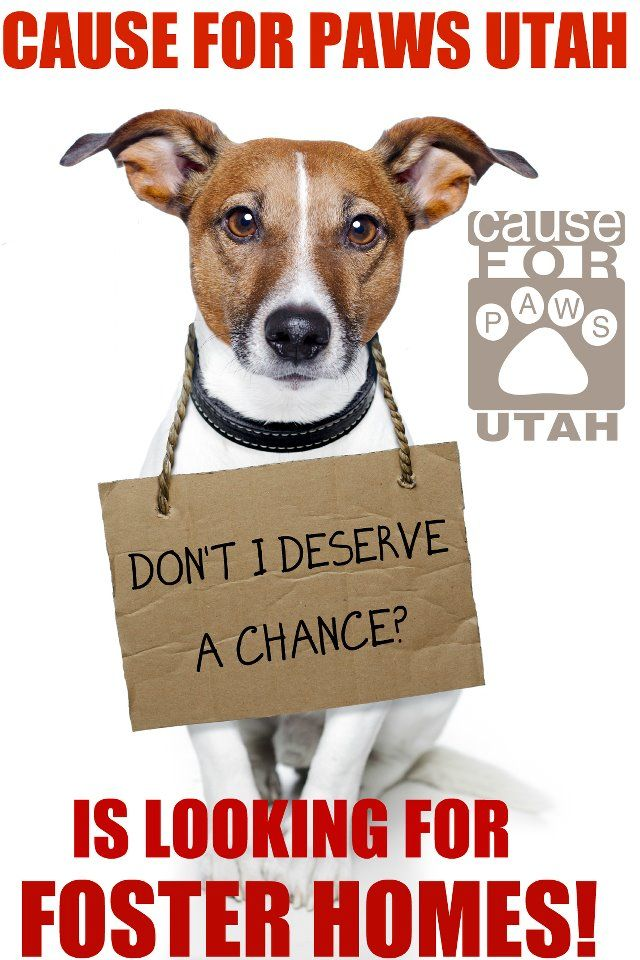 Please Share If You Can T Help Someone You Know Might Cause For Paws Is Looking For Fosters Currently We Have A Animal Advocacy Adoption Options Buy A Dog