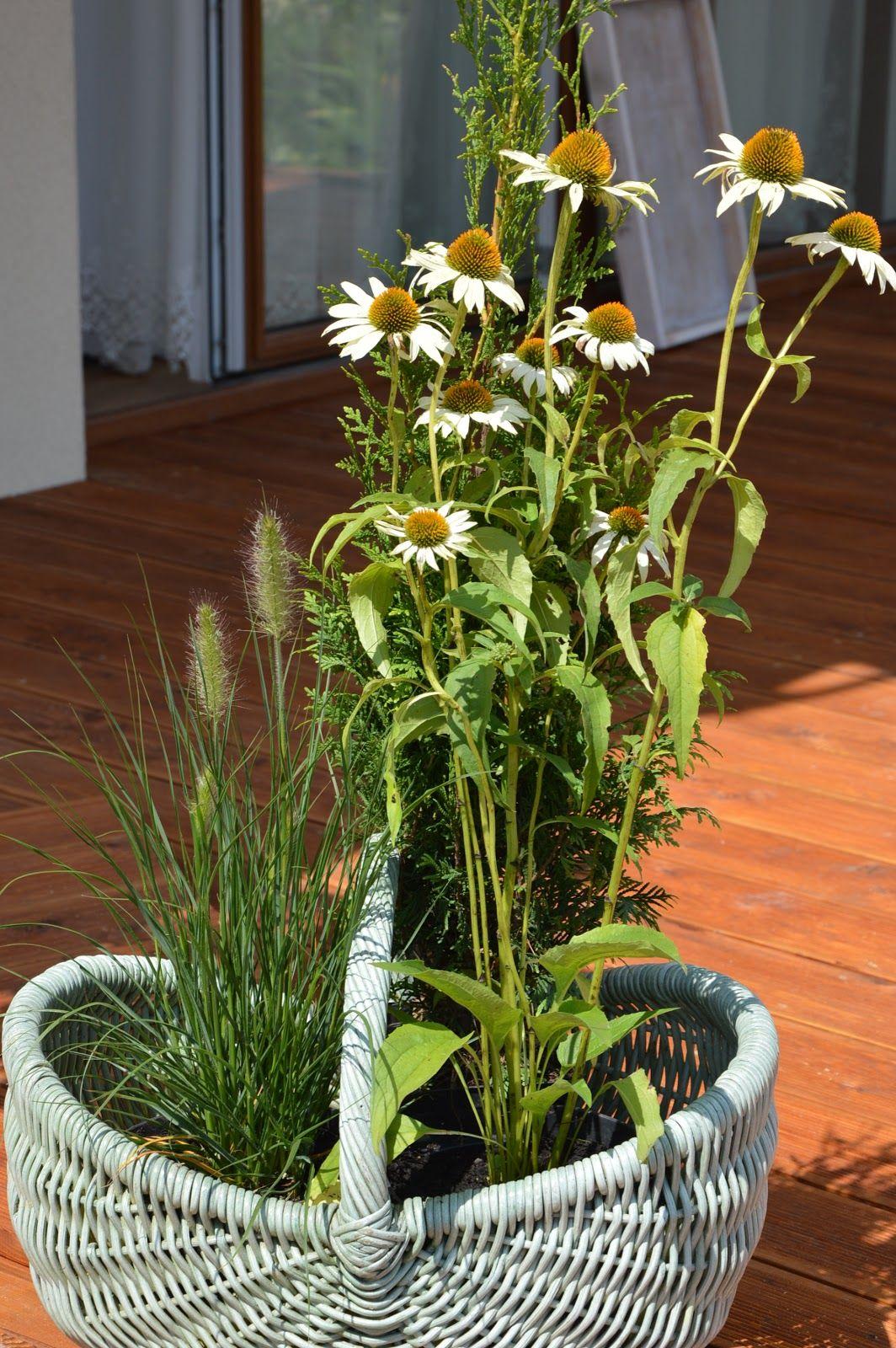 Bibeloteka Plants