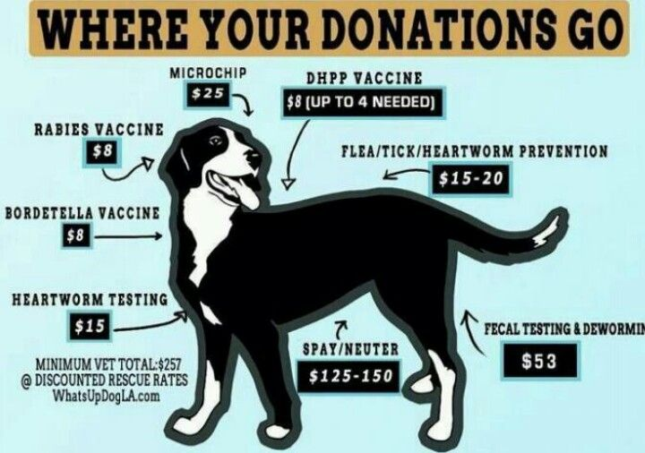 Wonderful Idea For Poster Or Thank You Note Animal Shelter Fundraiser Animal Shelter Donations Animal Rescue Ideas