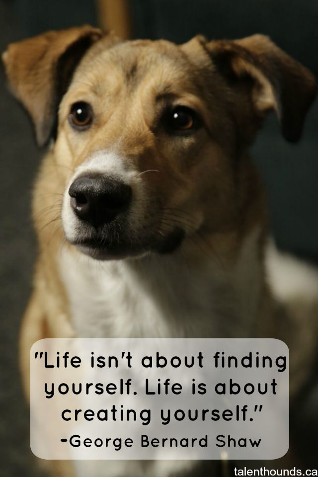 The Most Inspirational Quotes Of the Year Dog quotes