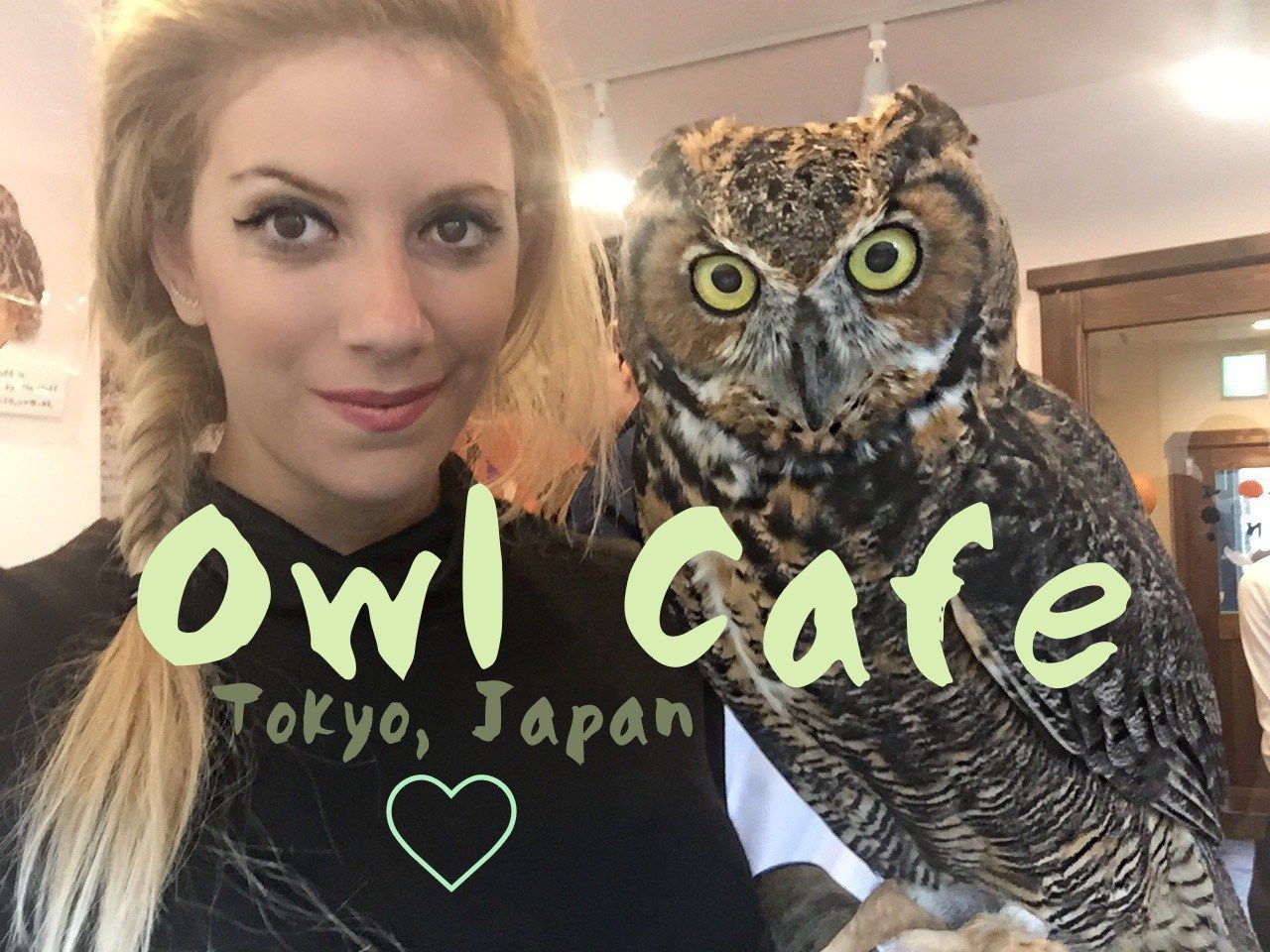 Everything You Need To Know About The Owl Cafe In Tokyo, Japan -