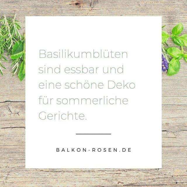 Basilikumblüten streue ich gerne als abschließende Verzierung über Pasta oder Salat.  #caprese #basilikum #kräuter #küchenkräuter #balkonpflanzen #balkonliebe #balkonpflanzen #balkon #balcony #urbangardener #balkongarten #gartenblog #balkonblogger #balkon #kräutergartenbalkon