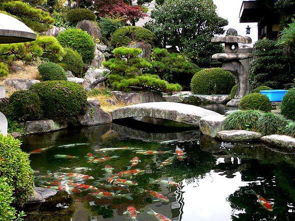 Koi pond mirar els arbres en forma de bola sortidors for Japanese pond design ideas