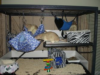Cages and Bedding - RockaBye  Rattery