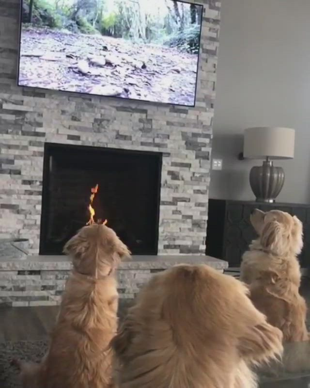 17 Pictures That Show Golden-doodles Are Absolutely Adorable!