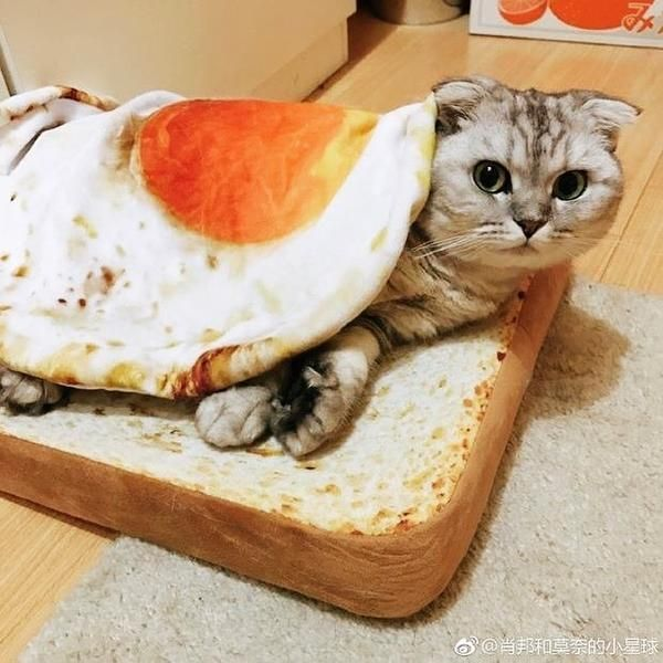 b6c417460 Toast Cat Bed and Poached Egg Blanket Combo